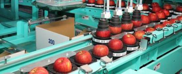 青森りんごの流通
