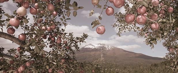 青森りんごの歴史