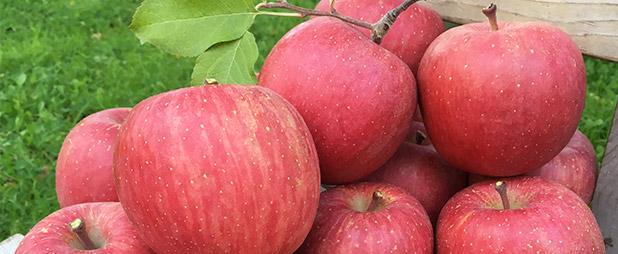 青森りんごの生産量