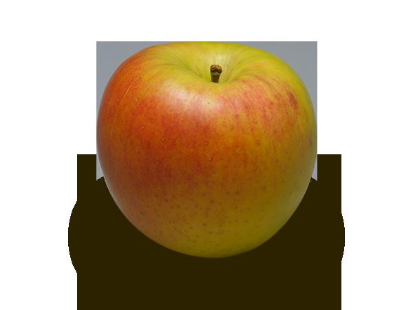 りんごの品種 名月(ぐんま名月)