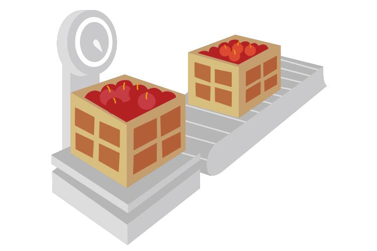 青森りんごジュース工程1 原料となるりんごの集荷