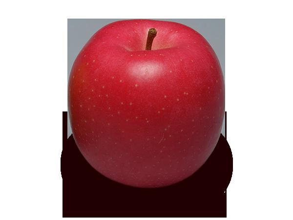 りんごの品種 陸奥(むつ)