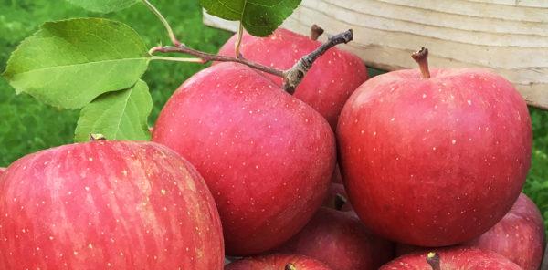青森りんごとは
