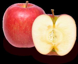 りんごの品種 北斗