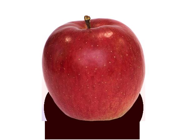 りんごの品種 シナノスイート