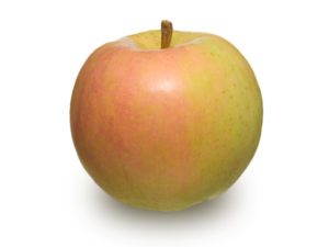 りんごの品種 トキ
