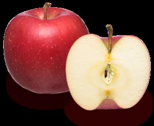 りんごの品種 早生ふじ