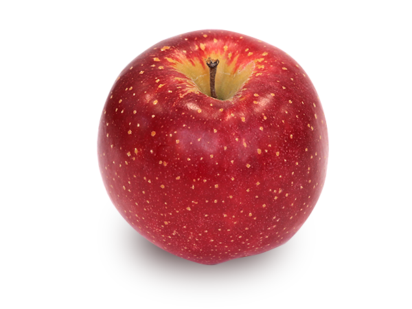りんごの品種 千雪(ちゆき)