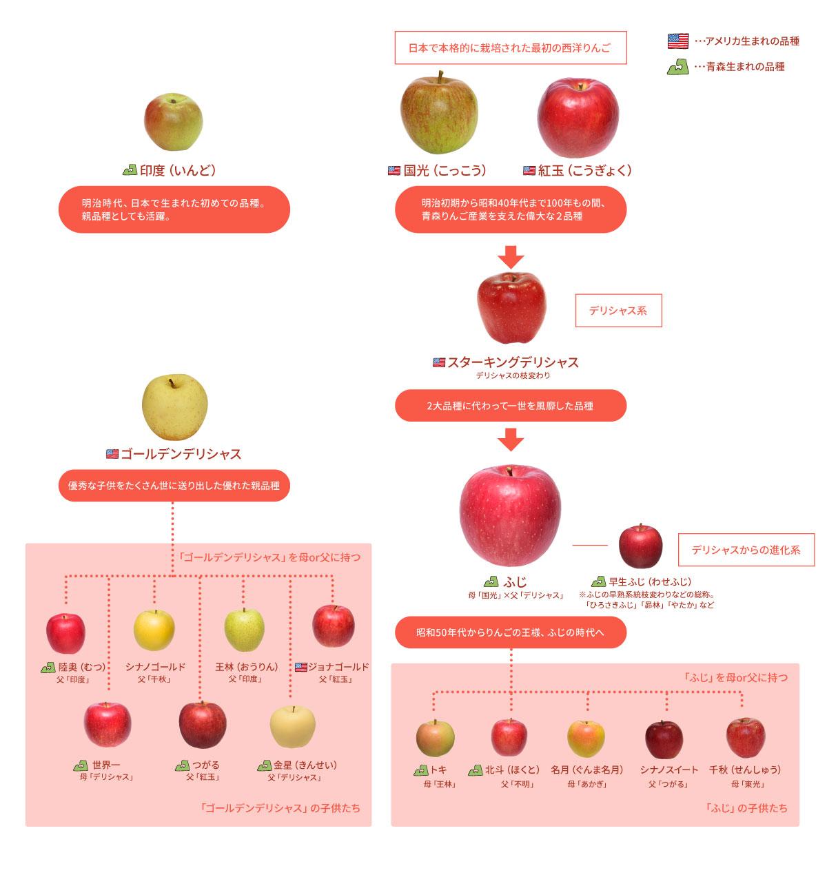 青森りんご主力品種 系譜早わかり図