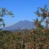 しゃかりきの「光ママ」と「ひろちゃん」が青森のりんご園を訪問!YouTube公開中